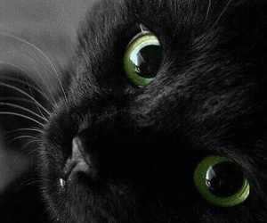 animals, black cat, and green eyes image