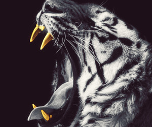 tiger, gold, and animal image