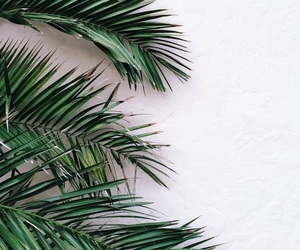 palms and green image