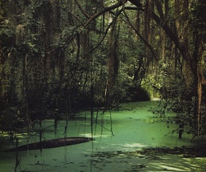 nature, green, and swamp image