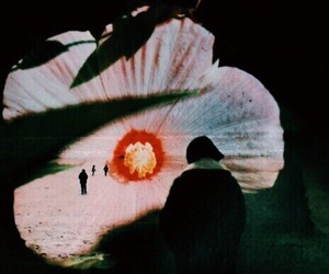 theme, dark, and flowers image