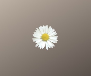 flower, image, and wallpaper image