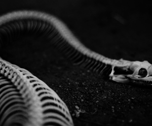 snake, skeleton, and black and white image