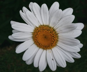 flor, flower, and photography image
