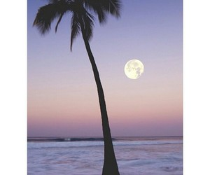 moon, tropical, and night image