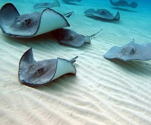 ocean, sand, and stingray image