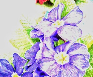 blue, red, and spring image