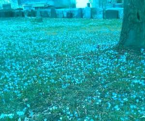 crocus, soft grunge, and flower image
