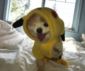 animals, cute animals, and cute dog image