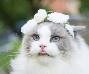 cutest, cutie, and flower cat image