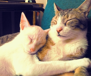 adopt, best friends, and cat image
