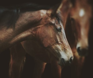 horse and horses image