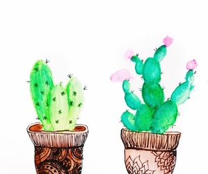 cacti and cactus image