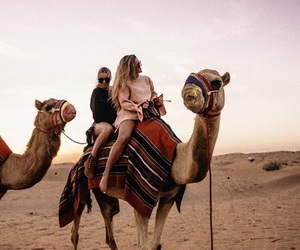 camels, cool, and wild image
