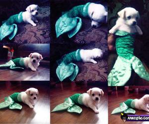 dog, cute, and mermaid image