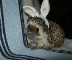 cute, animal, and hedgehog image