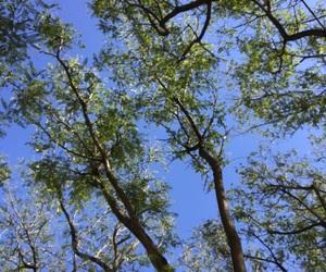 arboles, cielo, and hojas image