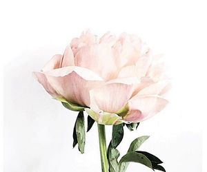 flower, inspiration, and pink image