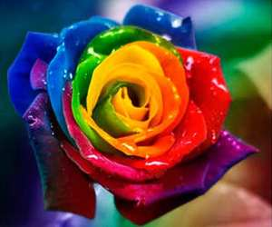 colores and rosa image