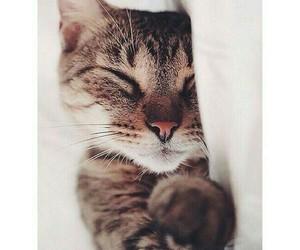 animal, blog, and cat image