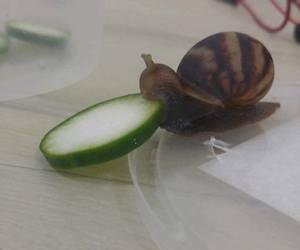 animal and snail image