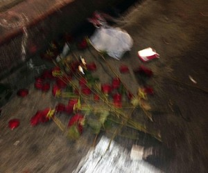 rose, blurry, and aesthetic image