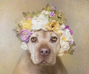 animal, dog, and flower power image