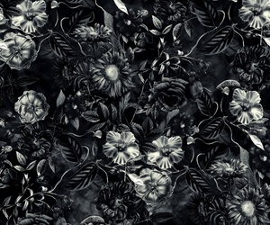 background, black and white, and botanical image