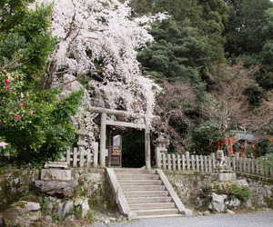 architecture, architektur, and cherry blossoms image