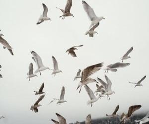 bird and theme image