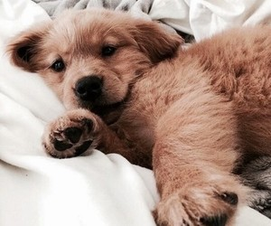 dog, nice, and love image