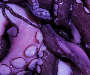 octupus, purple, and tentacles image
