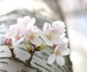 flowers, tree, and spring image
