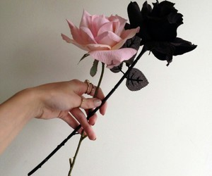 black, roses, and flower image