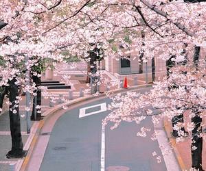 japan, sakura, and street image