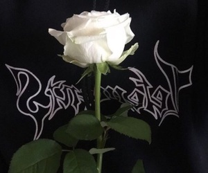 rose, theme, and flowers image