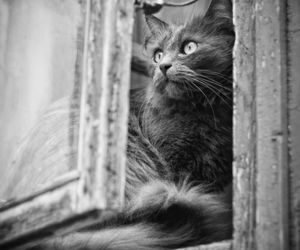 cats and window image