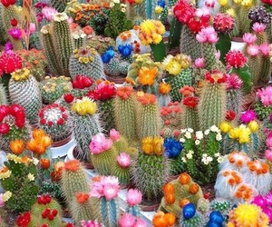 cactus, flowers, and pretty image