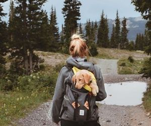 travel, adventure, and dog image
