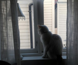 cat, window, and yo image