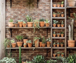 cactus, succulents, and plants image