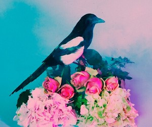 flowers, bird, and the 1975 image