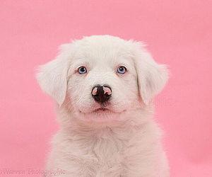 Pup <3