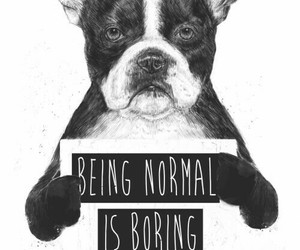 dog and normal image