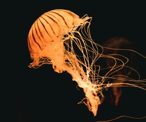 beautiful, jelly fish, and lights image