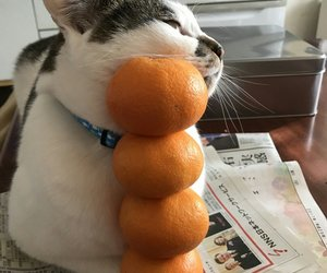 cat, orange, and cute image