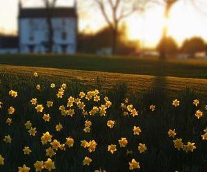 daffodils and house image