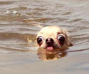 dog, funny, and eyes image