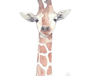 drawing, giraffe, and illustration image
