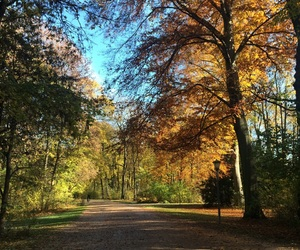 autumn, munich, and trees image